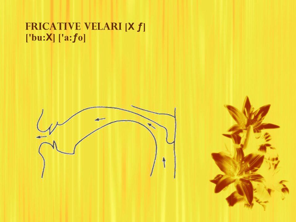 Fricative velari [X ƒ] [ bu:X] [ a:ƒo]